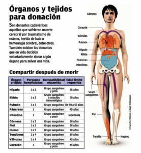 Mitos y verdades sobre el Trasplante de órganos