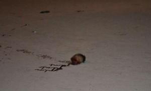 Mujer mata y decapita al hombre que la violó y la dejó embarazada
