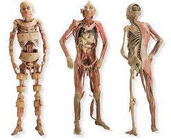 20 partes del cuerpo humano que no tienen ninguna utilidad