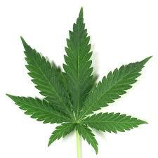 La marihuana puede duplicar el riesgo de cáncer testicular