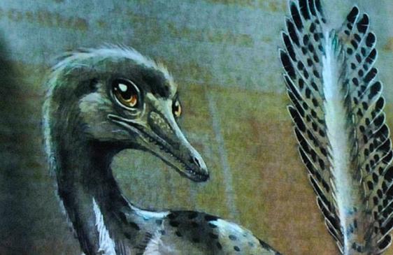 """""""Alnashetri cerropoliciensis"""", un dinosaurio de 95 millones de años"""