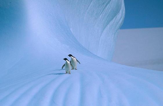 Nuevas medidas para la conservación de la vida marina en la Antartida