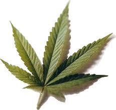 Riesgos y beneficios puede traer el consumo de marihuana