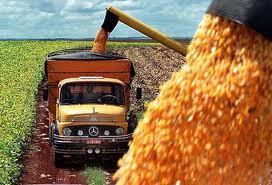China importó por primera vez maíz argentino