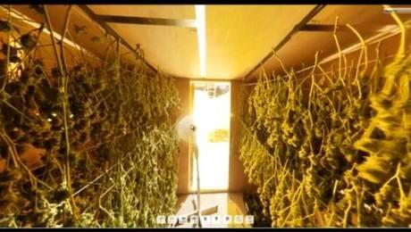 Clausuran la fábrica de marihuana mejor diseñada del mundo