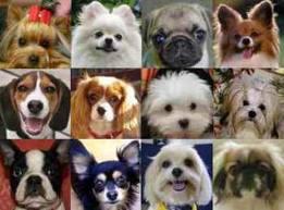 Las razas de perro más buscadas