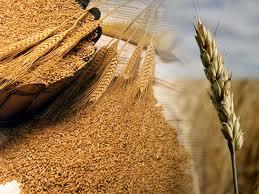 Ayuda para que cosechar sea más barato