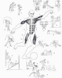 Los ejercicios que mas calorías queman