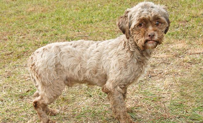 Perro fue abandonado por tener cara de humano