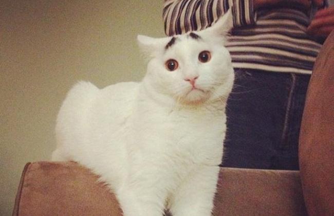 Un Gatito con cejas causa furor en Internet