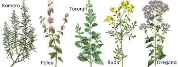 Una guía para aprender a reproducir hierbas aromáticas