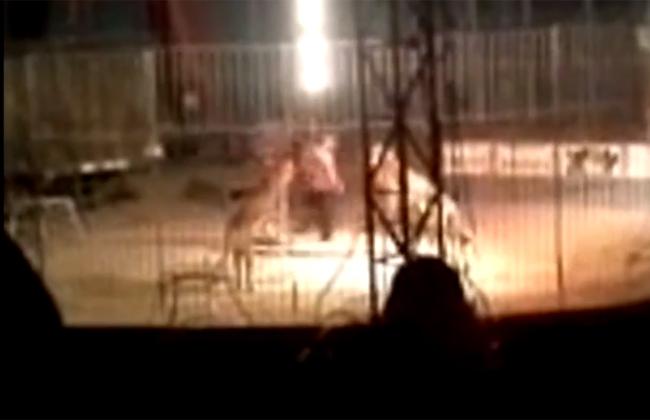 Video: Tigre mata a su domador en pleno show