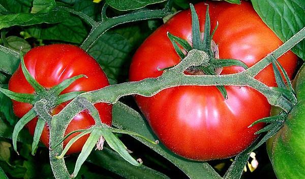 Fiesta Nacional del Tomate y la producción en Río Negro