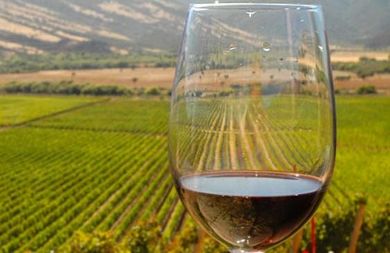 Vinos argentinos premiados en Francia