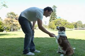Cómo adiestrar un perro