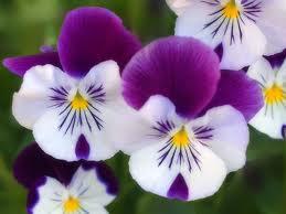 El significado de cada flor que regalas
