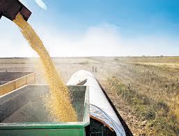Agricultura confirma que fue segunda cosecha récord de la historia argentina