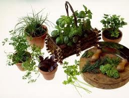 Cómo reproducir y multiplicar las hierbas aromáticas