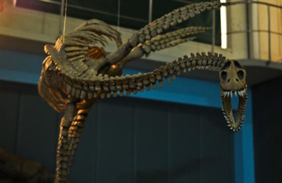 Exhiben ejemplar de plesiosaurio en el Museo de Ciencias Naturales