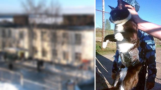Con un gato para traficaban celulares en la cárcel