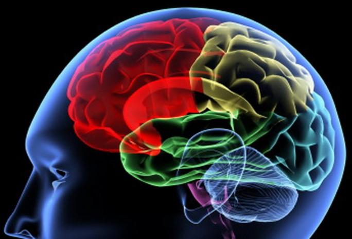 Ejercicios para mantener vivo el cerebro