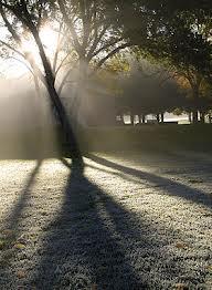 Cuál es la diferencia entre neblina y niebla ?