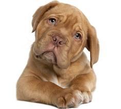 """10 """"mandamientos"""" que tu perro quiere que sepas de él"""