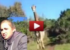 Video: Jirafa persigue a turista