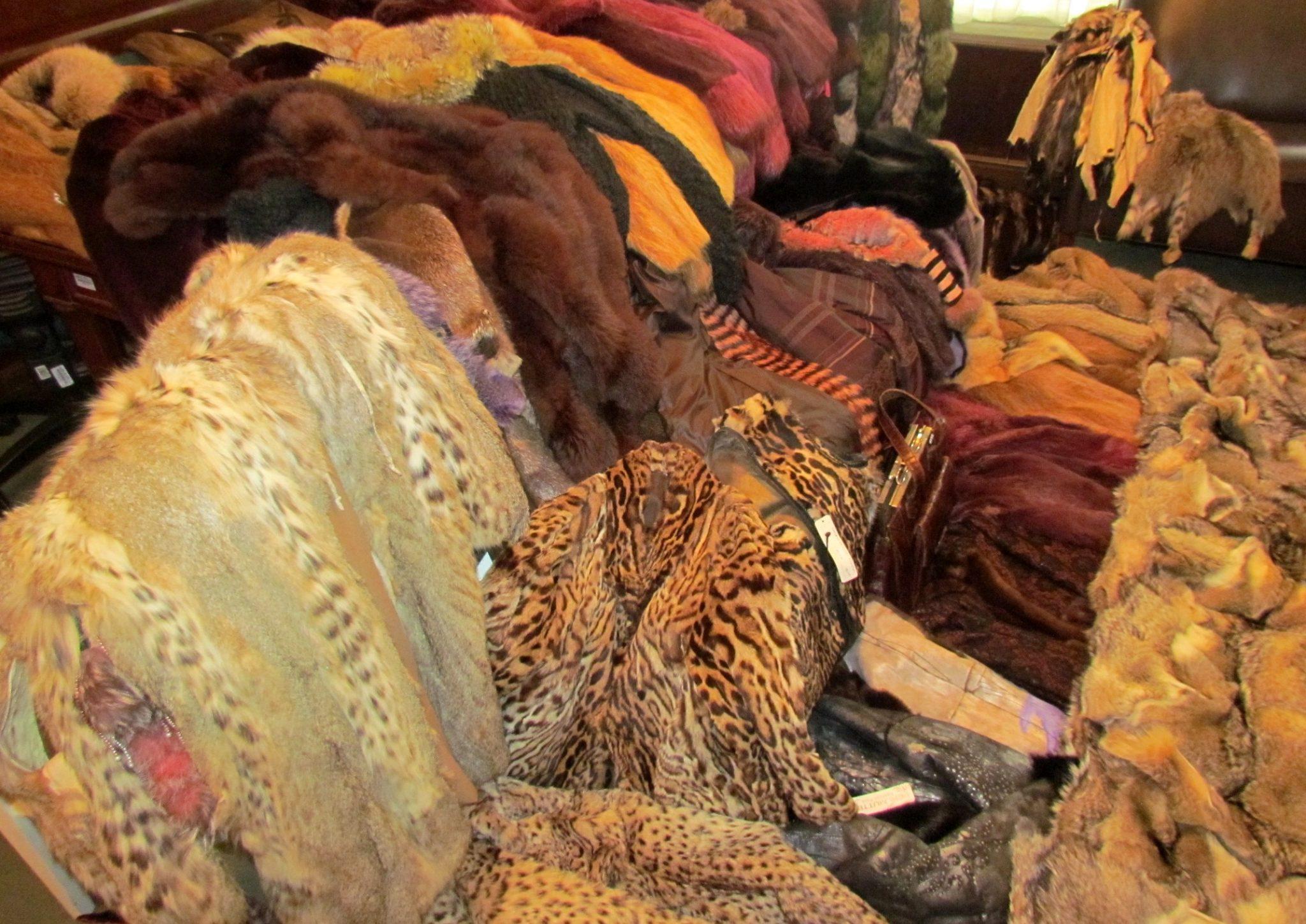 Secuestran más productos con cueros y pieles de fauna silvestre