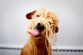 Comidas humanas que podés darle a tu perro