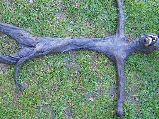 Se resolvió el misterio del supuesto cuerpo de extraterrestre encontrado en Sudáfrica