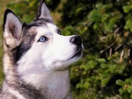 Los perros imitan y recuerdan las acciones de los humanos