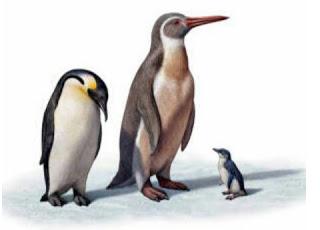 Encuentran en la Antártida restos de un pingüino gigante