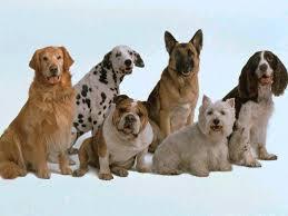 Las razas de perro más buscadas en el mundo