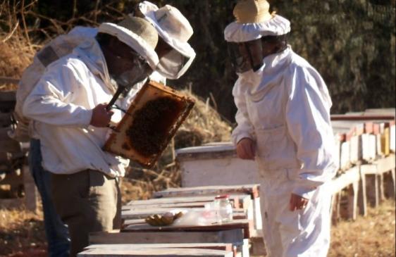 Semana de la apicultura en Mendoza