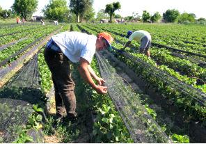 Renatea busca aumentar la registración de trabajadores agrarios en Entre Ríos