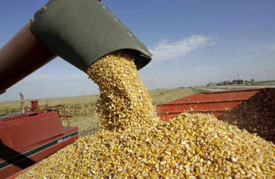 China recibie 60.000 toneladas de maíz argentino