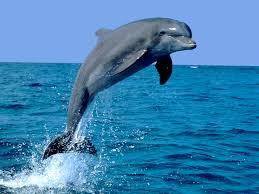 El delfín es el animal con más memoria