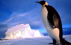 Encuentran restos de pingüino gigante en la Antártida