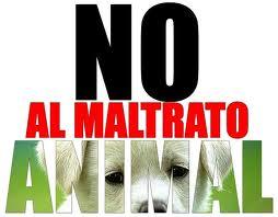 Primera condena a prisión por el delito de maltrato a un animal