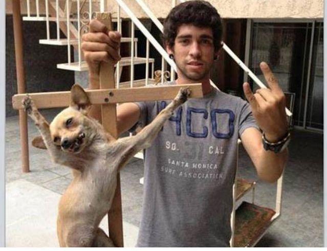 Indignación en las redes sociales por una foto de un perro crucificado