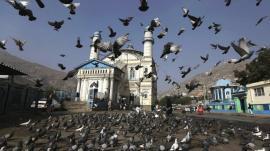 """Invasión de """"palomas zombies"""" en Moscú"""