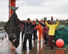 Atrapó un pez gigante que pesa más que un gorila