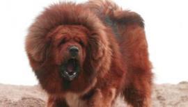 Zoológico disfrazaba a perros como leones
