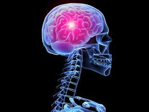 Curiosidades sobre el funcionamiento del cerebro humano
