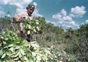 Trabajo detectó 11 personas en condiciones de esclavitud
