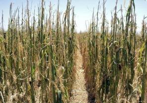 Emergencia agropecuaria en distintas regiones del país