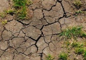 Declaran la emergencia agropecuaria en Catamarca, Mendoza, Río Negro y San Juan