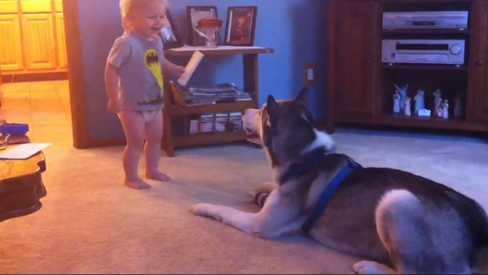 Video: Increíble conversación entre un bebé y un husky siberiano.