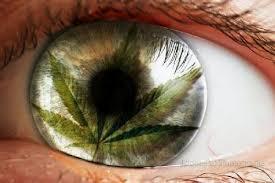 Washington se convirtió en el segundo estado de Estados Unidos que legaliza la venta de marihuana